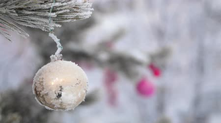 Toy ball hanging on spruce branch in winter outdoors. Wideo