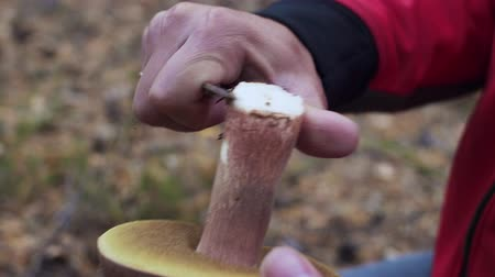 Close-up shot on man cut with a knife mushroom. Wideo