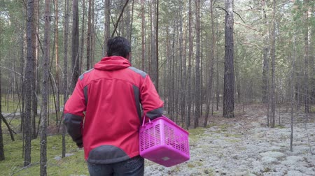 čepice : Man with a basket walks in the coniferous forest and looks for mushrooms. Dostupné videozáznamy