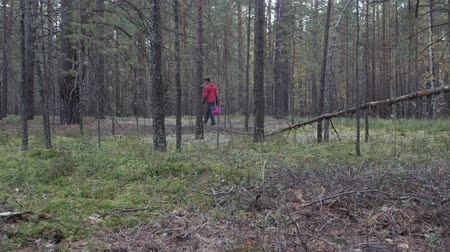 looking for : Man with a basket walks in the coniferous forest and looks for mushrooms. Stock Footage
