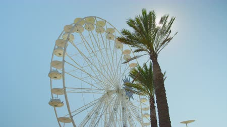 palmbomen : SLOW MOTION: Big ferris wheel spinning behind tall palms Stockvideo