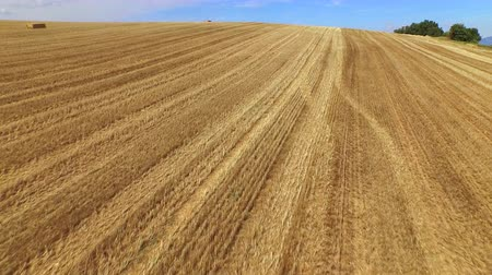 valensole : AERIAL: Bales of hay lying on a harvested wheat field Stock Footage