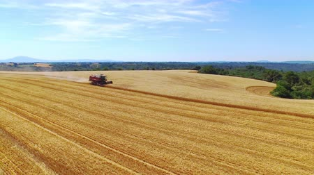 干し草 : AERIAL: Flying around harvester cutting crop on gold yellow wheat field in sunny summer