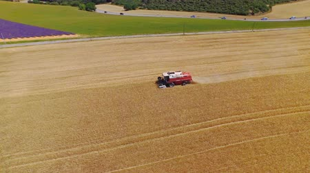hay mowing : AERIAL: Combine harvesting crop on golden yellow wheat field on a beautiful sunny day Stock Footage