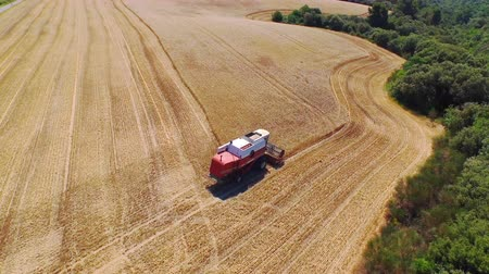 tillage : AERIAL CLOSE UP: Flying above combine harvesting crop on a golden wheat field on a beautiful summer day