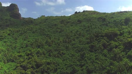 AERIAL: Beautiful lush green jungle on tropical island in sunny summer