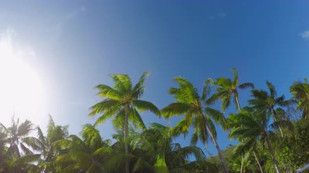 Полинезия : Beautiful lush palm trees swaying in the wind on tropical island in sunny summer