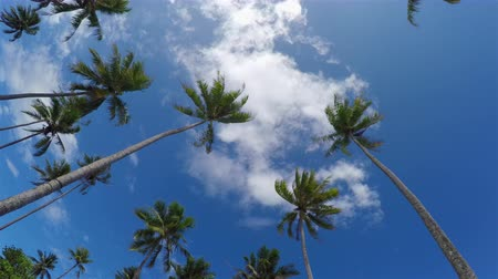 Полинезия : Beautiful tall palm trees on tropical island in French Polynesia Стоковые видеозаписи
