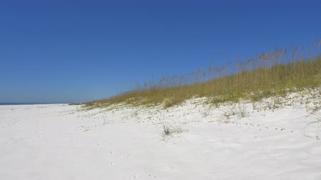 dune : Beautiful pure white sand desert dunes in Emerald beach Florida