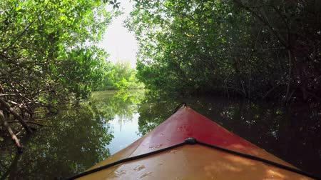 bananenboom : FPV CLOSE UP: Kanovaren op rivier door mangrovebos Stockvideo