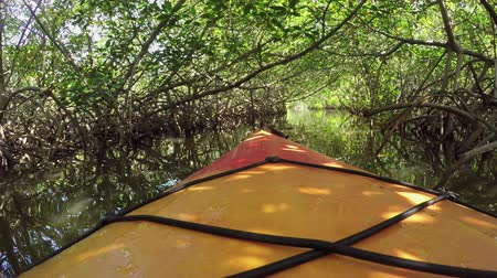 bin : FPV CLOSE UP: Kayaking canoeing on beautiful calm river canal in dense lush mangrove jungle forest in sunny summer