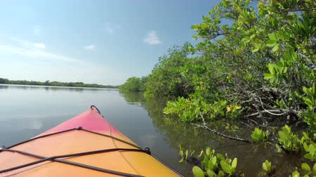 каноэ : Kayaking on calm waters in lush mangrove jungle forest on a beautiful summer day in sunny Florida Стоковые видеозаписи