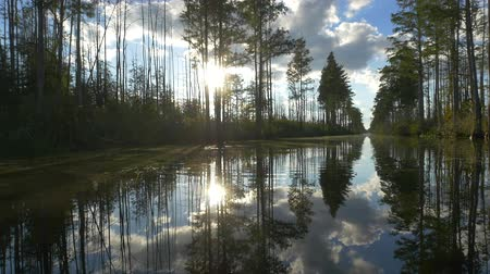 swamps : AERIAL: Amazing wetlands swamp canal with tall mossy trees in beautiful summer evening. Gorgeous reflection of cypress swamp tree canopies with beautiful spanish moss in calm glassy water surface Stock Footage