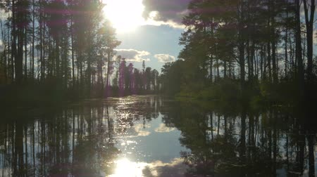 cypřiš : AERIAL: Amazing wetlands swamp canal with tall mossy trees in beautiful summer evening. Gorgeous reflection of cypress swamp tree canopies with beautiful spanish moss in calm glassy water surface Dostupné videozáznamy