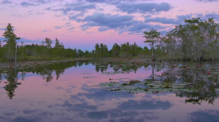 lilyum : Romantic wetlands swamp with water lilies and cypress swamp trees covered in amazing spanish moss at pink sunset in summer. Gorgeous sky reflection in calm glassy water surface.