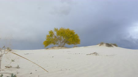 vaha : POV: Walking towards beautiful solitary tree oasis in the middle of white sandy desert before the storm.