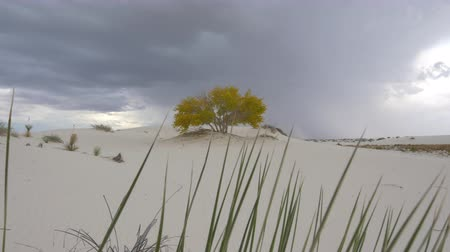 new mexico : CLOSE UP: Beautiful colorful autumn tree with yellow leaves in amazing White Sands desert valley before rain. Amazing thunderstorm lightening bolt in the dark cloudy sky in the background