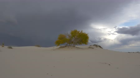 ветреный : CLOSE UP: Beautiful colorful autumn tree with yellow leaves in amazing White Sands desert valley before rain. Amazing thunderstorm lightning bolt in the dark cloudy sky in the background