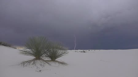 new mexico : CLOSE UP: Beautiful soaptree yucca cactus bushes in amazing White Sands desert valley before rain. Amazing thunderstorm lightening bolt in the dark cloudy sky in the background Stock Footage