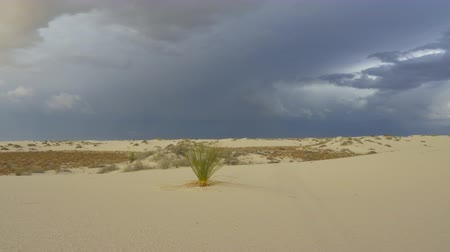vándorlás : Yucca cactus bush in White Sands desert with dramatic stormy sky in New Mexico