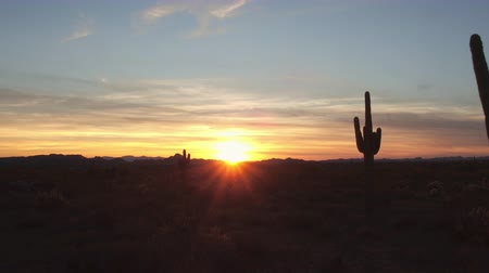 prickly : AERIAL CLOSE UP: Amazing huge cactuses growing in vast desert valley landscape in western Arizona at beautiful red and orange sunset Stock Footage