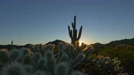 dikenli : CLOSE UP: Golden sunrise sun shining through cactus spikes and thorns in beautiful Arizona desert valley