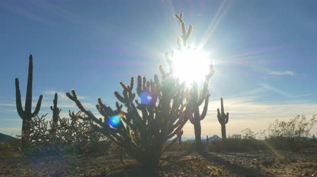 dikenli : SLOW MOTION CLOSE UP LOW ANGLE VIEW: Summer sun shining through wild cactus pricks in desert wilderness