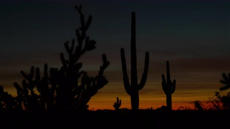 pichlavý : SLOW MOTION CLOSE UP: Amazing thorny and prickly cactus silhouettes against beautiful dark orange sunset sky in Arizona desert on amazing summer evening after the sunset