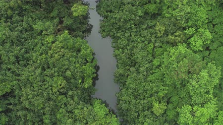 primeval : AERIAL CLOSE UP: Flying right above beautiful jungle treetops and lush canopies along peaceful river in thick deciduous, acacia rainforest. People canoeing surrounded by lush green jungle forest
