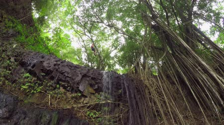 zarostlý : Young woman speed riding a zipline in fascinating overgrown tropic jungle forest in Hawaii. Adrenaline ride over tall rocky ledge and beautiful small waterfall in the middle of lush deciduous jungle Dostupné videozáznamy