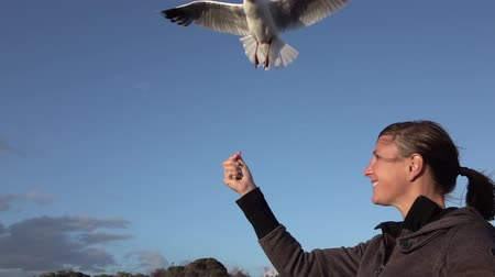 grabbing : SLOW MOTION CLOSE UP: Fearless cute seagulls taking food from young girls hand while flying in blue skies. Intelligent pretty gulls flying above young girl. Happy girl feeding hungry birds. Stock Footage