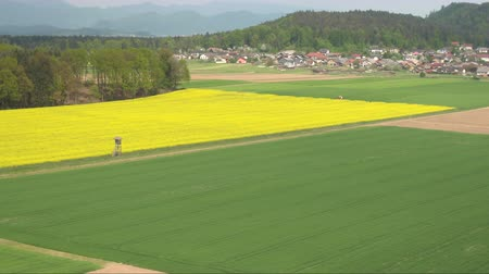 kolza tohumu : AERIAL: Beautiful yellow blooming rapeseed and young green wheatgrass on biological agricultural field in summer breeze on sunny spring evening near small rural village surrounded by lush forest hills Stok Video