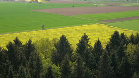oleaginosa : AERIAL: Beautiful yellow blooming rapeseed and young green wheatgrass on biological agricultural field in summer breeze on sunny spring evening. Crop rotation and growing different types of crops