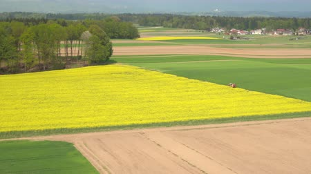 rapa : AERIAL: Lush green wheat and yellow oilseed rape fields in vast countryside farm on sunny day. Big rural houses in small suburban village town with lush green forest hills and mountains in background