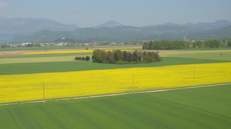 oleaginosa : AERIAL: Lush green wheat and yellow oilseed rape fields in vast countryside farm on sunny day. Big rural houses in small suburban village town with lush green forest hills and mountains in background