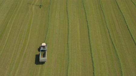 собирают : AERIAL: Flying above farming tractor on agricultural farmland field collecting harvest in forage wagon. Farmer picking up and loading mowed hay in swaths on loader, making fodder supply for animals