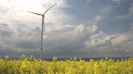 rapa : CLOSE UP: Beautiful lush yellow turnip blooming on vast agricultural field. Big white windmills rotating and converting wind power into rotational energy. Modern wind turbines generating electricity