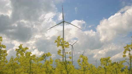 pervane : CLOSE UP, LOW ANGLE VIEW: Beautiful lush yellow turnip blooming on vast agricultural field. Big white modern windmill turbine rotating, converting wind power into energy and generating electricity