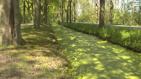 stagnant : CLOSE UP: Stunning pond bank and thick layer of algae growing on surface of small water canal along walking promenade at beautiful big park in Amsterdam on warm sunny spring day Stock Footage