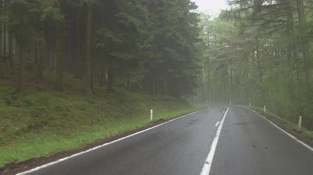 rota : FPV: Driving on winding country road through lush misty forest after rain in spring Stok Video