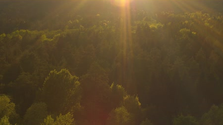 opadavý : AERIAL: Golden sunbeams shining on lush green treetops in mixed forest at beautiful sunset