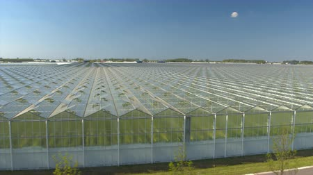 horticulture : AERIAL, CLOSE UP: Flying above beautiful vast modern plantation of stunning glass greenhouses on sunny spring day. Organic cultivation of natural and fresh vegetables in big horticultural town