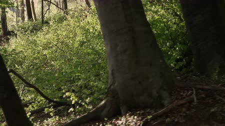 tree stump : SLOW MOTION CLOSE UP: Stacked cut raw timber wood logs in young lush forest in sunny spring Stock Footage