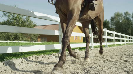 beygir gücü : SLOW MOTION CLOSE UP: Beautiful big dark brown gelding trotting in sandy manege. Dressage female rider horseback riding a strong powerful brown stallion horse, training in outdoors riding arena