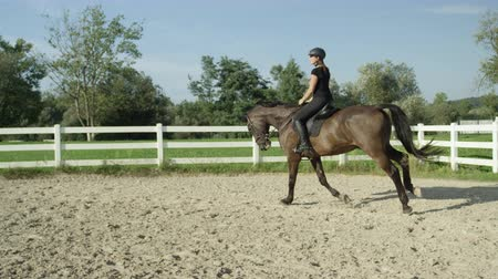 stallion : SLOW MOTION CLOSE UP: Beautiful big dark brown gelding cantering in sandy manege. Dressage female rider horseback riding a strong powerful brown stallion horse, galloping in outdoors riding arena