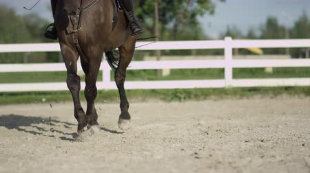 haunches : SLOW MOTION, CLOSE UP, DOF: Strong powerful dark brown dressage horse riding traver in big sandy manege. Female dressage rider and horse doing a leg-yield haunches-in element in outdoors riding arena