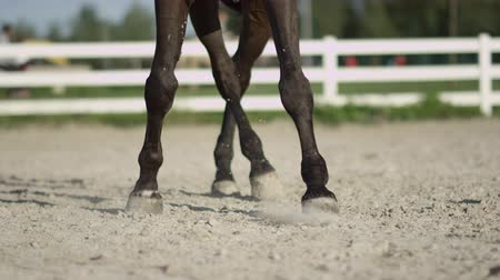 haunches : SLOW MOTION, CLOSE UP, DOF: Beautiful dark dressage horse riding sideways trotting renver in big sandy manege. Dressage rider and horse doing a lateral work half-pass element in outdoors riding arena