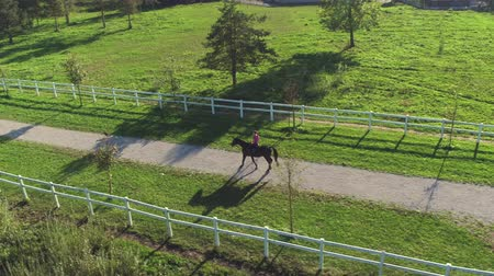 kleštěnec : AERIAL: Flying above young female rider horseback riding a big dark bay horse on footpath through the pasture field in beautiful sunny nature. Dog running before the cowgirl relaxing and enjoying