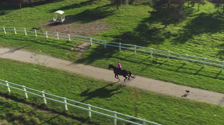 dörtnal : AERIAL: Young female rider horseback riding a big dark bay horse in beautiful sunny nature. Dog running behind the cowgirl woman cantering along the footpath through beautiful vast pasture fields. Stok Video