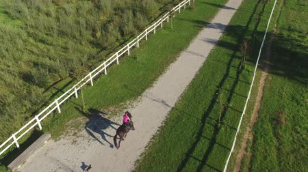 dörtnal : AERIAL: Young female rider horseback riding a big dark bay horse in beautiful sunny nature. Dog running behind the cowgirl woman trotting and cantering along the footpath through the pasture fields.